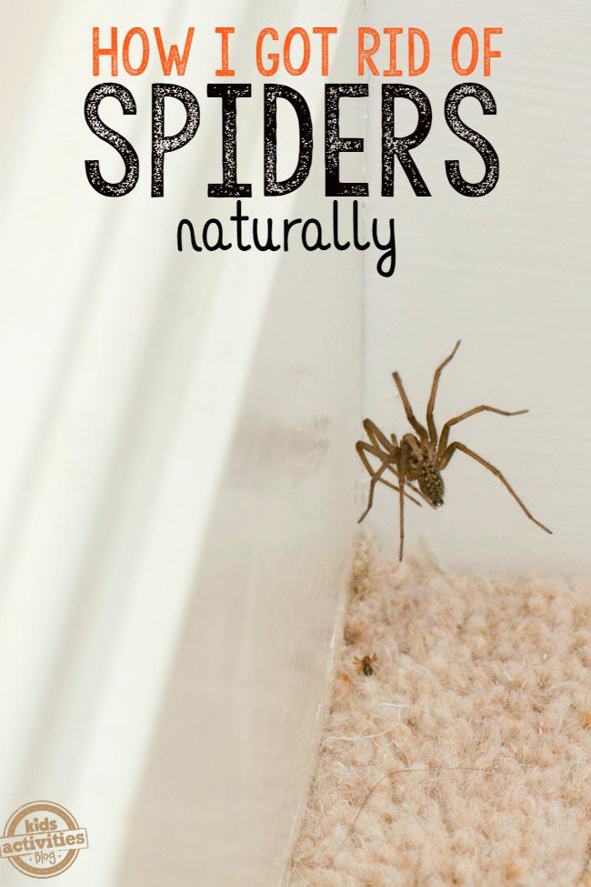 Do you hate spiders or don't like having them in your home? No wonder, they aren't the most pleasant creatures on our planet. There are some natural alternative solutions that actually work and keep them away. Check out!