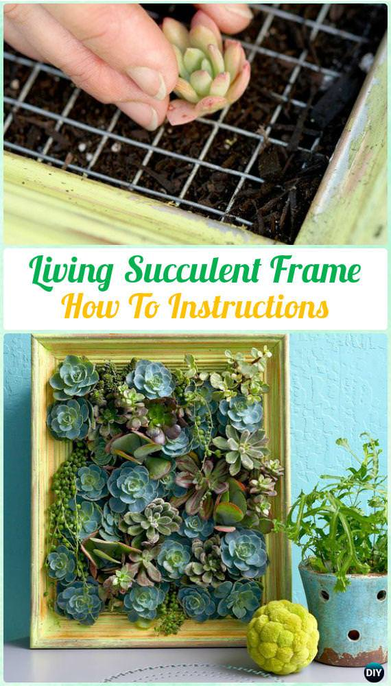DIY Living Succulent Picture Frame